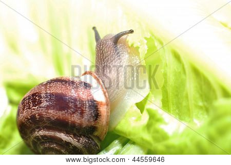 close up to snail on green background