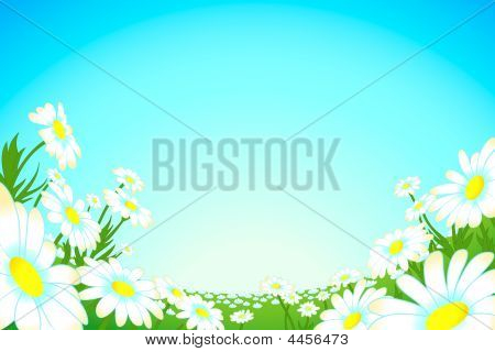 Summer Camomile Meadow
