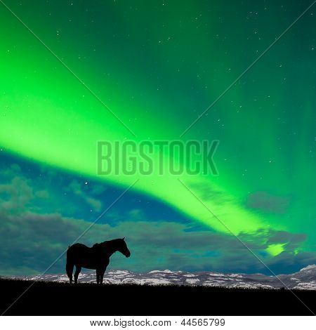 Horse distant snowy peaks with Northern Lights sky