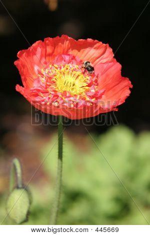Flower Bee 2