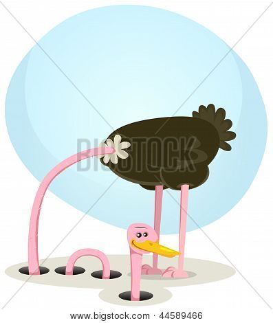 Ostrich Hiding And Looking From Hole