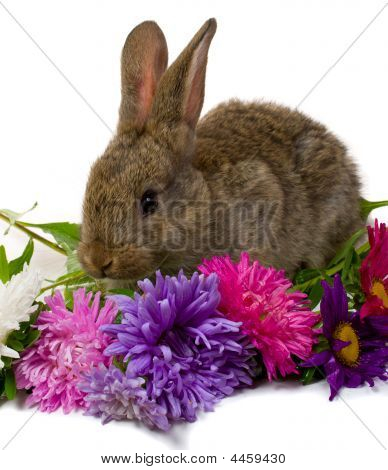 Bunny Take Aster Flowers