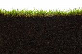 picture of cross-section  - cross section of grass and soil against white background - JPG