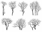 stock photo of ash-tree  - Set of vector silhouettes of trees without leaves during the winter or spring period - JPG