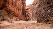 stock photo of buckskin  - Beautiful sandstone walls rise up above a sandy bottom in Buckskin Gulch Utah - JPG