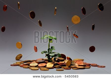 Blooming Plant On Coins