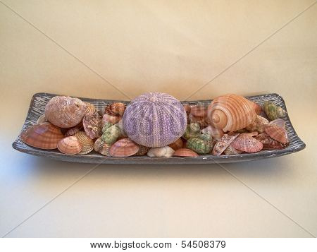 variety of sea urchins and shells