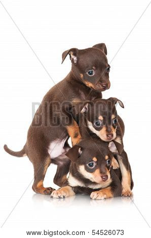 three adorable small puppies