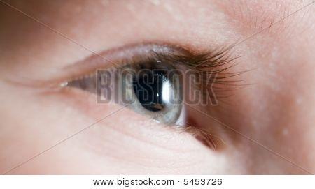 Eye (macro)
