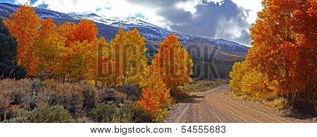 Fall Foliage At The Eastern Sierra Nevada Mountains In California