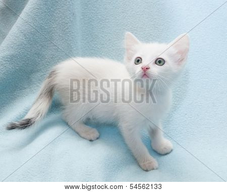 White Kitten Warily Looking Up
