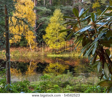 Moray Autumn water garden