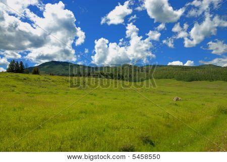 Summer In Colorado Mountains