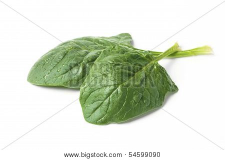 Spinach Leafs