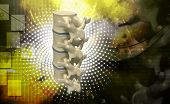 pic of lumbar spine  - Digital illustration of human spine in colour background - JPG