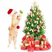 image of yellow tabby  - Ginger santa cat and Christmas tree isolated white background - JPG