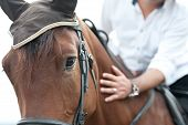 foto of horse-riders  - closeup of a horse head with detail on the eye and on rider hand - JPG