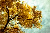 picture of ash-tree  - Autumn trees background - JPG