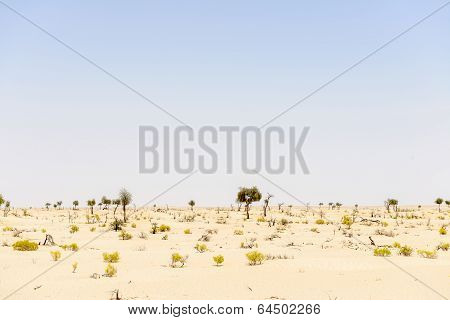 Sand Dunes With Trees And Bushes In Desert (oman)