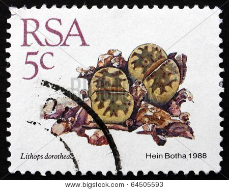 Postage Stamp South Africa 1988 Living Stones, Succulent Plant