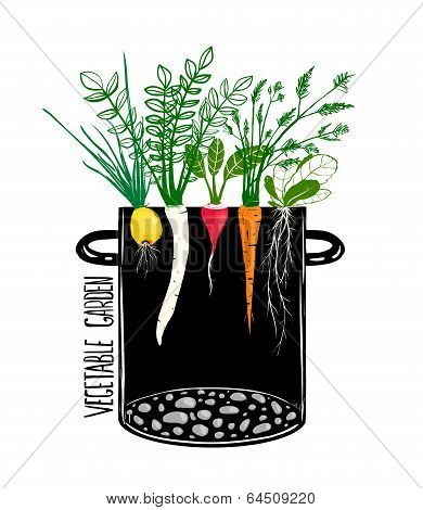 Grow Vegetable Garden and Cook Soup