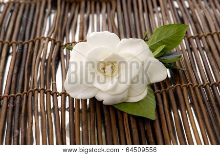 white gardenia on mat