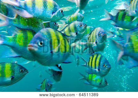 Group of coral fish in Andaman Sea near Krabi, Thailand. Image has soft focus.