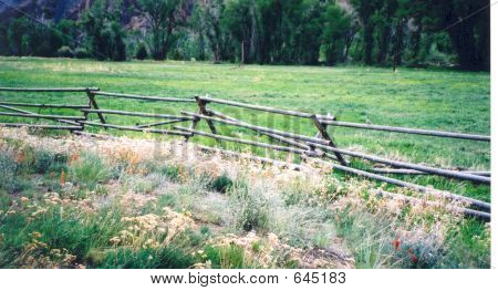 Split Rail Fence And Flowers