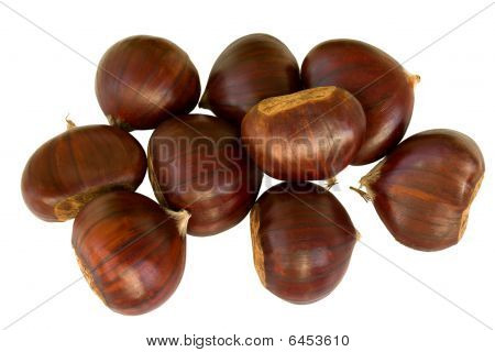 Chestnut, Chinquapin