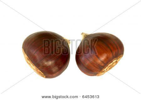 Chestnuts, Chinquapins