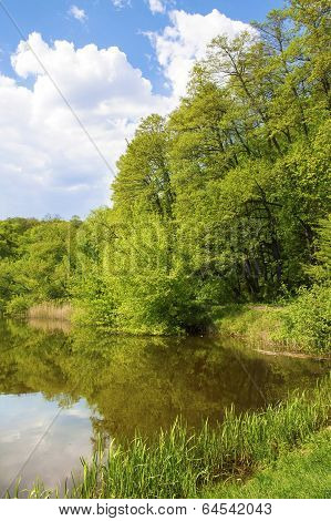 Forest On The Lakeside