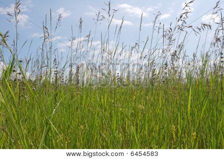 Grass Stems On Blue Sky