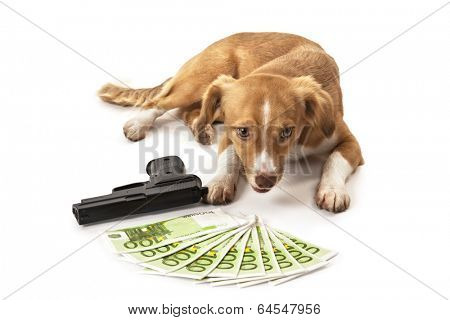Portrait of dog in front of handgun and euro banknote over white background