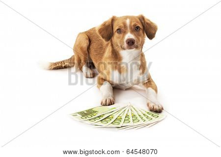 Portrait of dog in front of euro banknote over white background