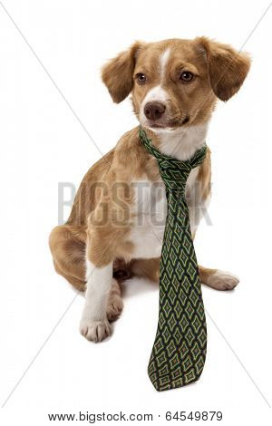 Cute dog wearing necktie isolated over white background
