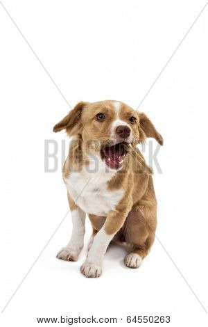 Portrait of mix breed dog eating bone