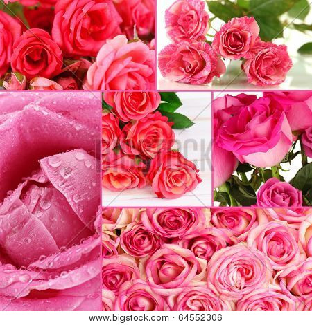 Beautiful roses collage