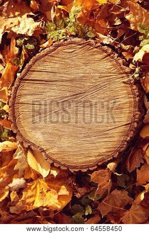 Autumn forest brown wooden fall background. Texture forest wooden stump in autumn leaves.