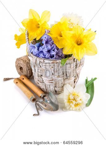 Tool for floriculture and flower in wicker basket. Isolated on white background