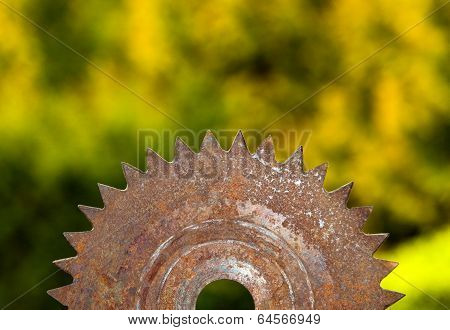 Rusted saw blade in nature