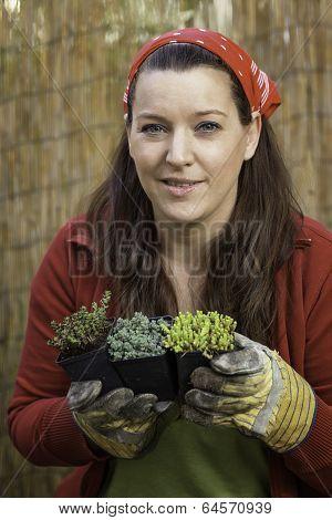 Woman Gardening - Rock Garden