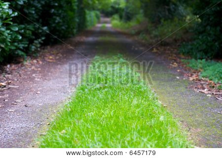 Grass Grows On Country Lane