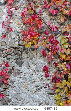 Autumn Leaves On A Wall