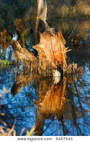Stump In A Swamp.