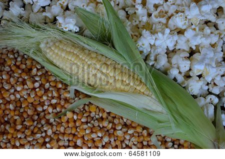 Corn in various forms