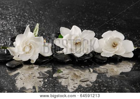 spa concept �¢�?�?gardenia flower with zen stone