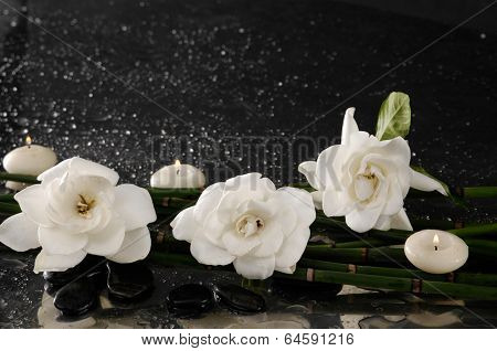 Three gardenia flower with thin bamboo grove on wet background