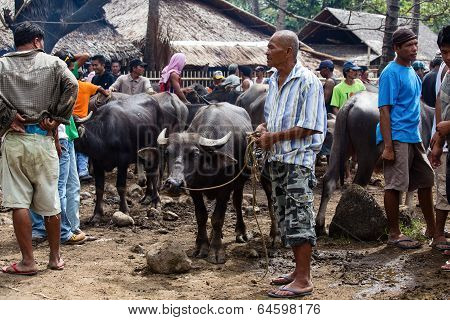 people buying and selling buffalo and other animals at market