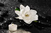foto of gardenia  - Still life with gardenia flower and candle on pebbles  - JPG