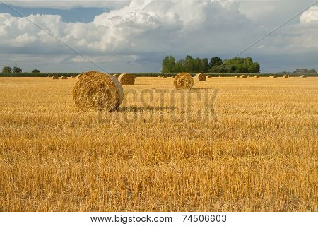Yellow Autumn Fields After Harvest